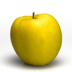 3288 - Golden Delicious Apples 20 lbs
